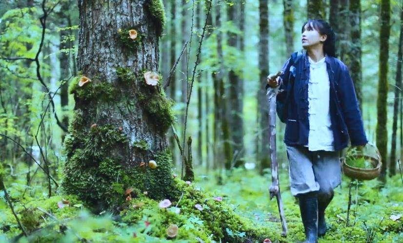 李子柒:山野里的一朵奇葩